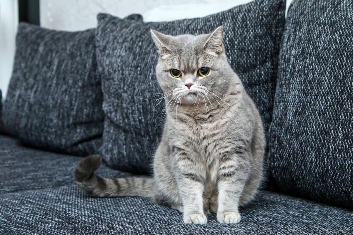 Σημάδια άγχους στις γάτες που πρέπει να προσέξετε
