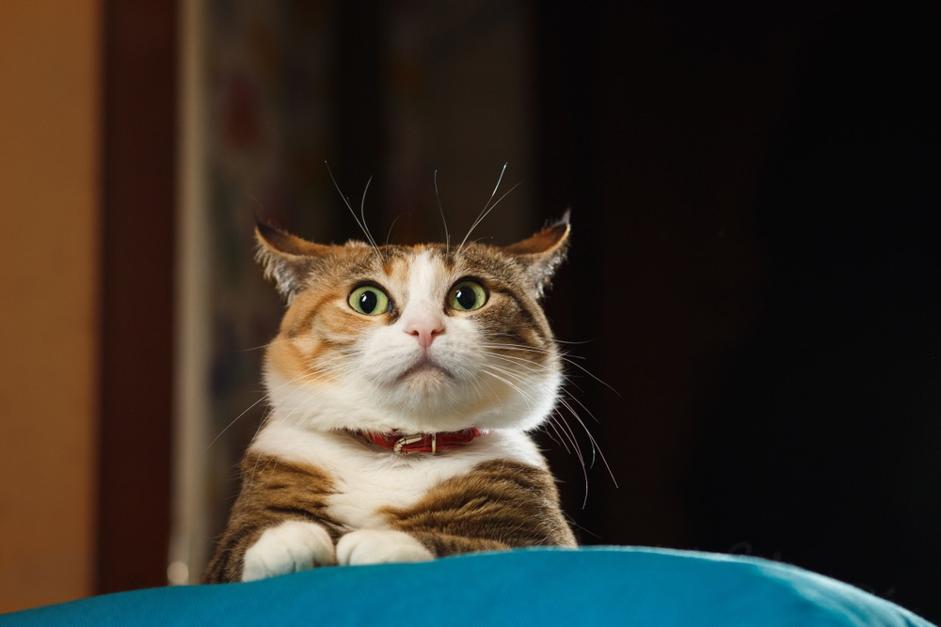 03. FELIWAY Cómo limpiar pis gato