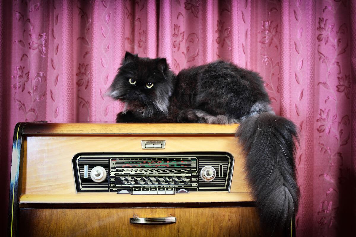 Feliway- musica y gatos