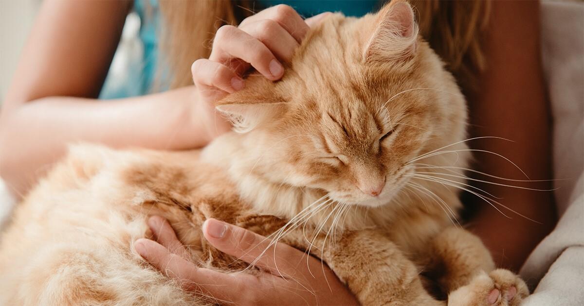 1. Como hacer que tu gato se acurruque en tu regazo_2