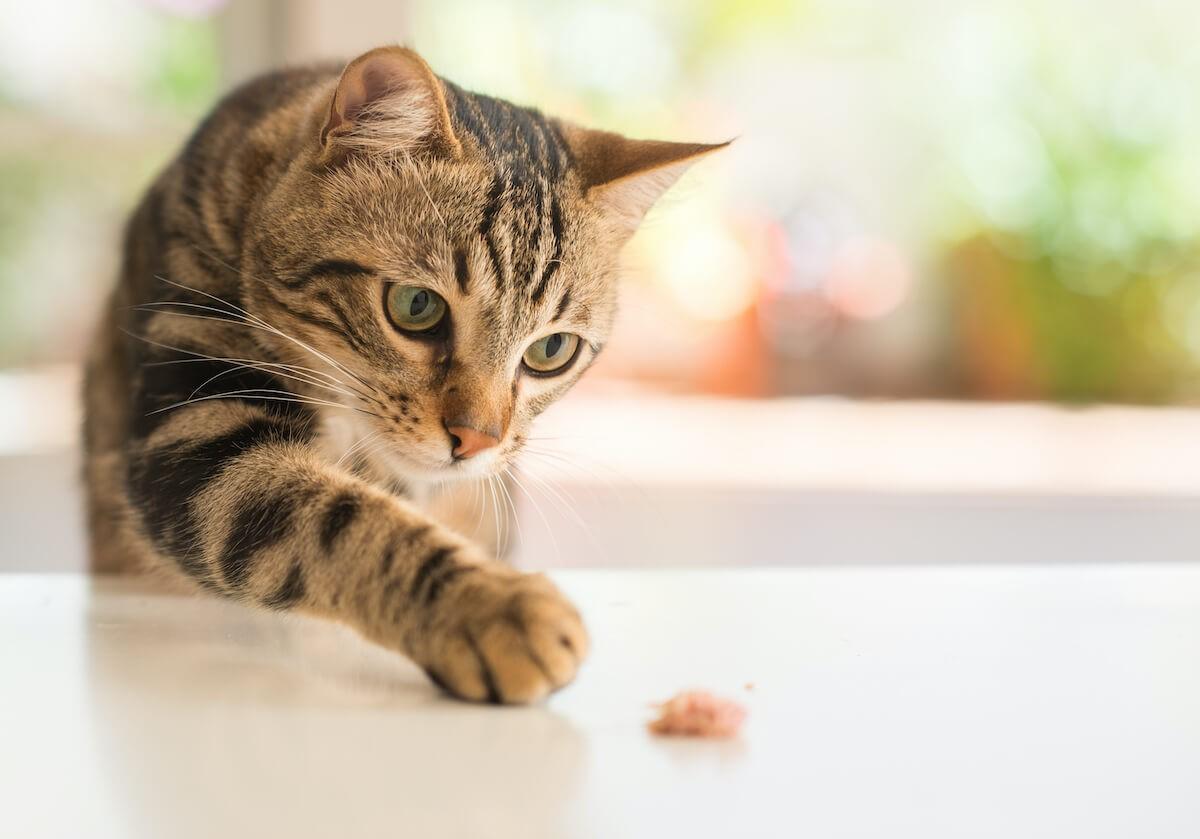 1. El punto de vista de un gato_ Los secretos de un gato feliz 2