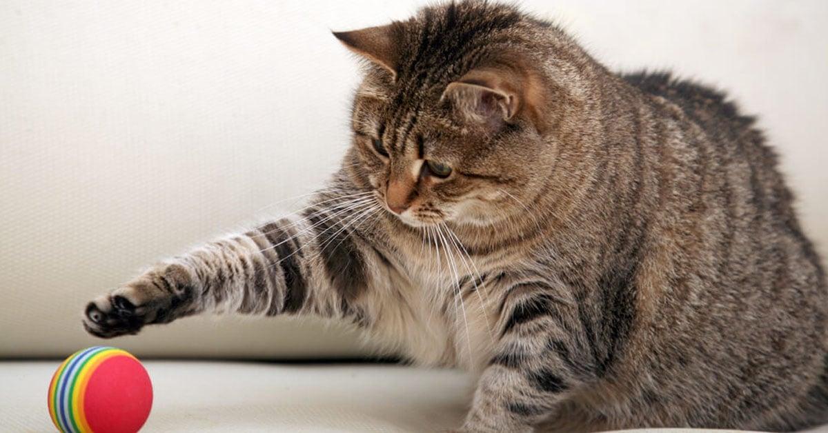 Katten med sin boll