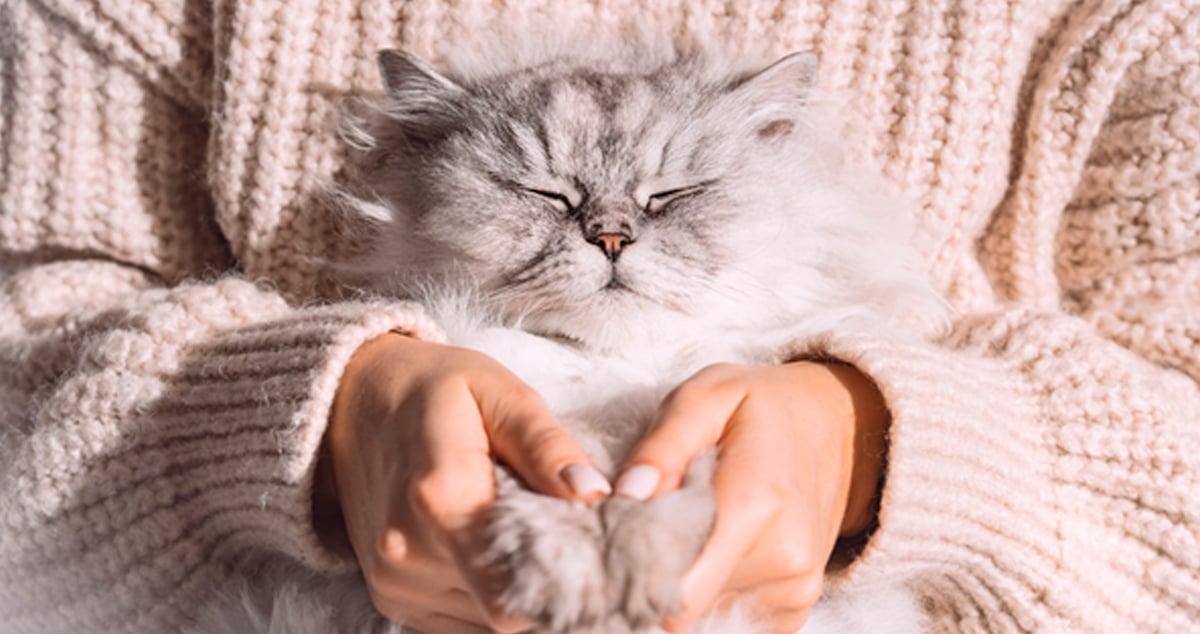 feliway_porque mi gato parpadea lentamente