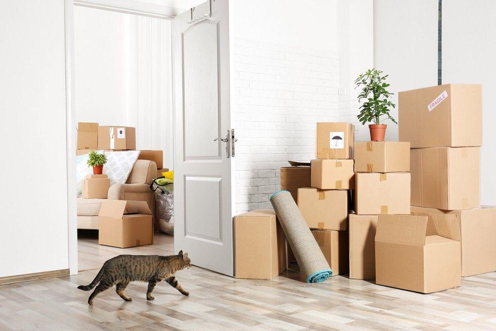 Verhuizen is stressvol voor je kat