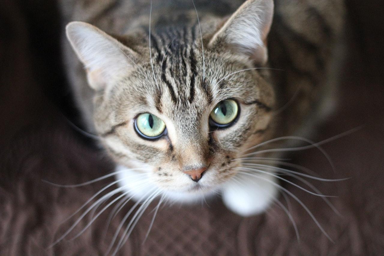 2. 8 maneras sorprendentes de tu gato de decirte Te quiero_1