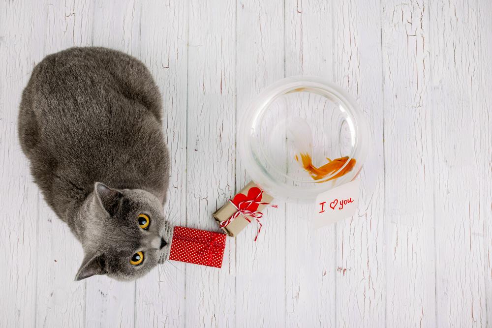 2. 8 maneras sorprendentes de tu gato de decirte Te quiero_2
