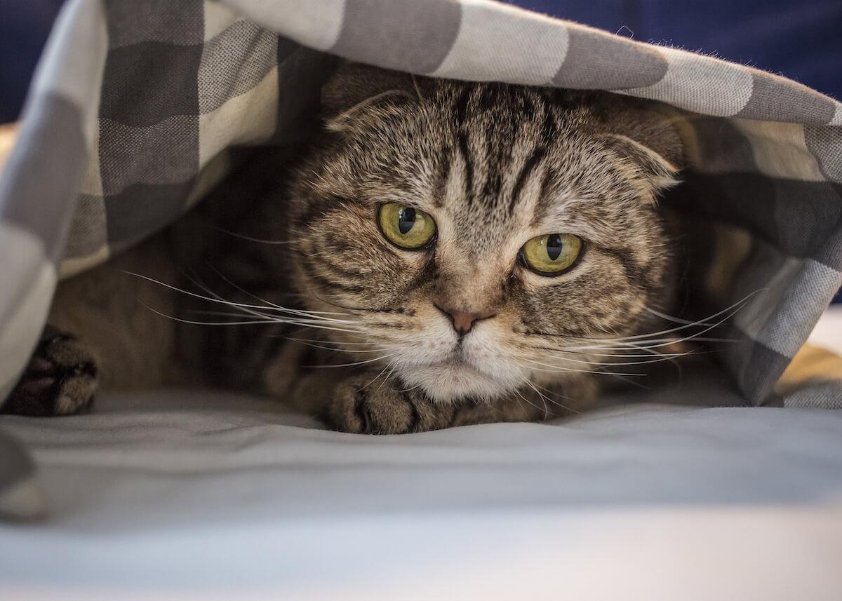 2. FELIWAY- gatos y mudanzas 2