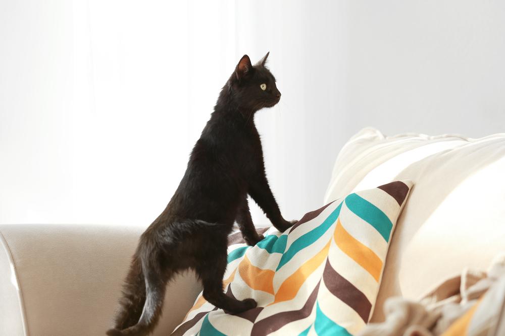 2. FELIWAY- gatos y mudanzas 5