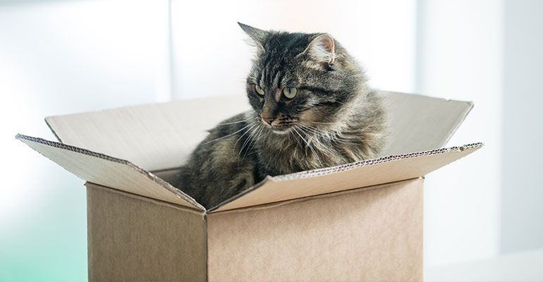 Ein Karton reicht aus, um Katzen zu beschäftigen