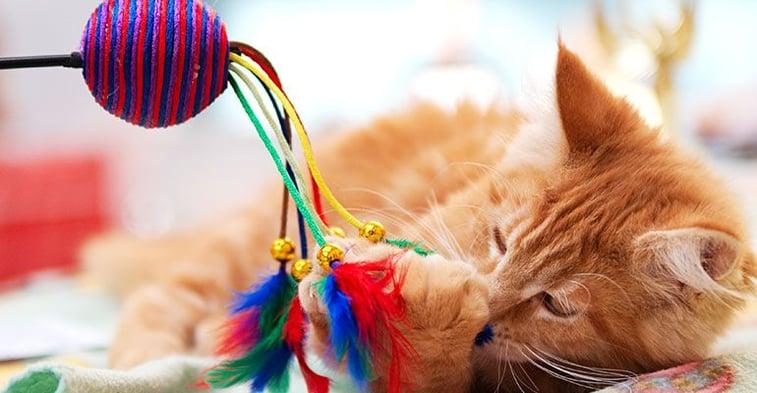 Katzen beschäftigen mit Spielzeug