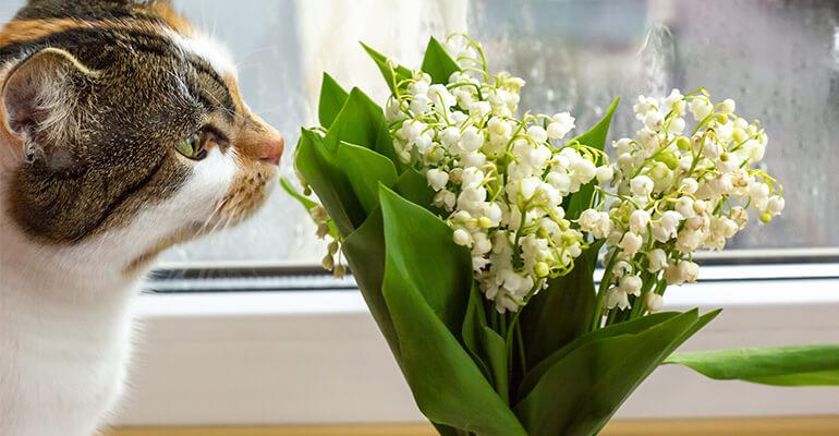 Giftige Pflanzen an Ostern für Katzen