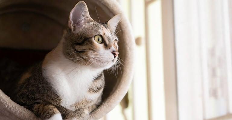 Hoelang mag ik mijn kat alleen thuis laten?