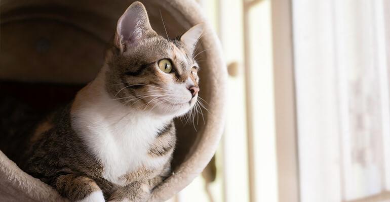 Zuhause katzengerecht machen