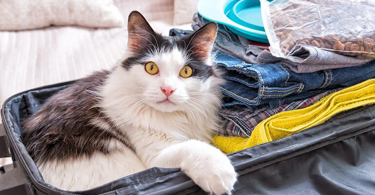 Katzen alleine lassen