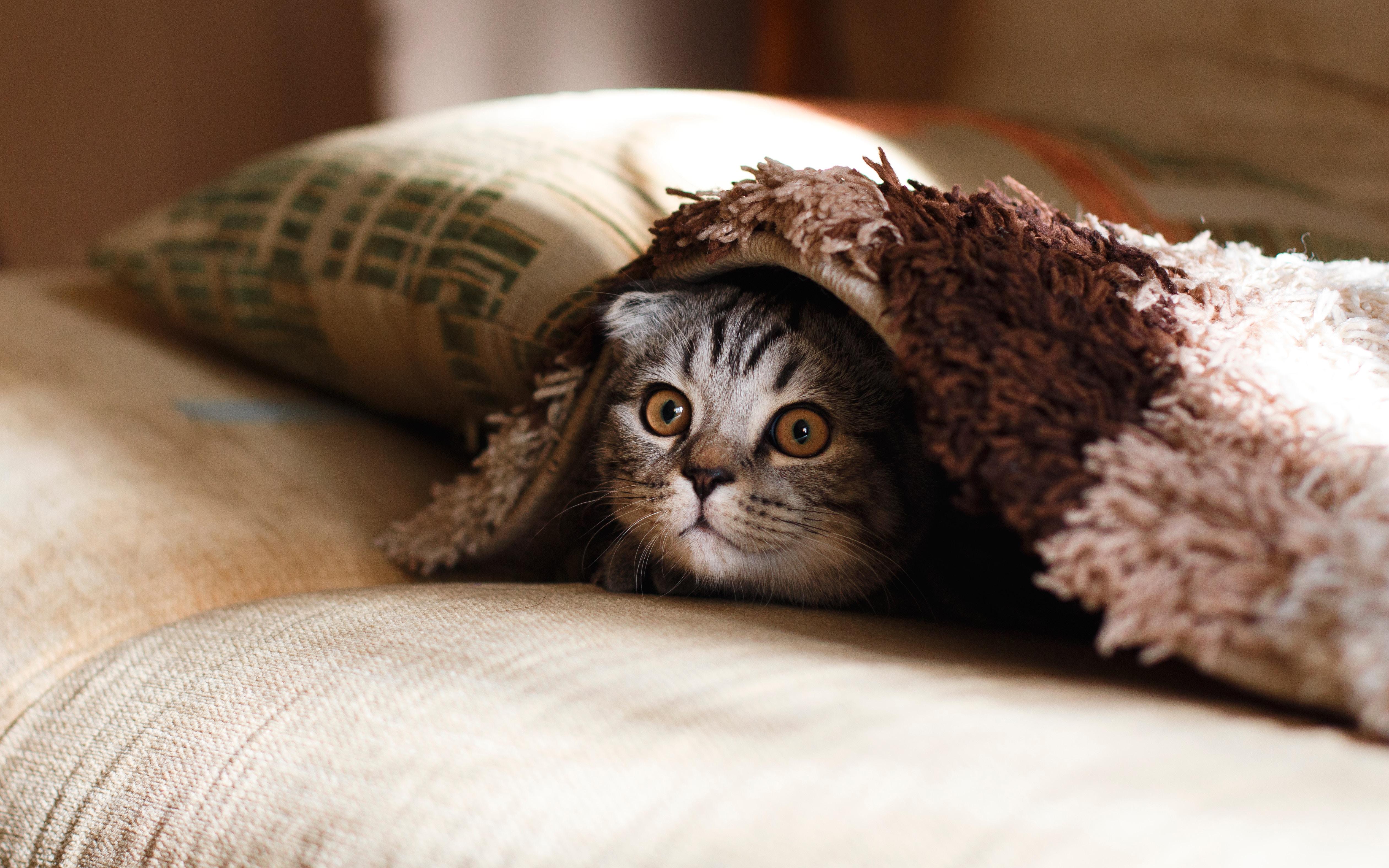 3. FELIWAY Descubre la personalidad de tu gato 4