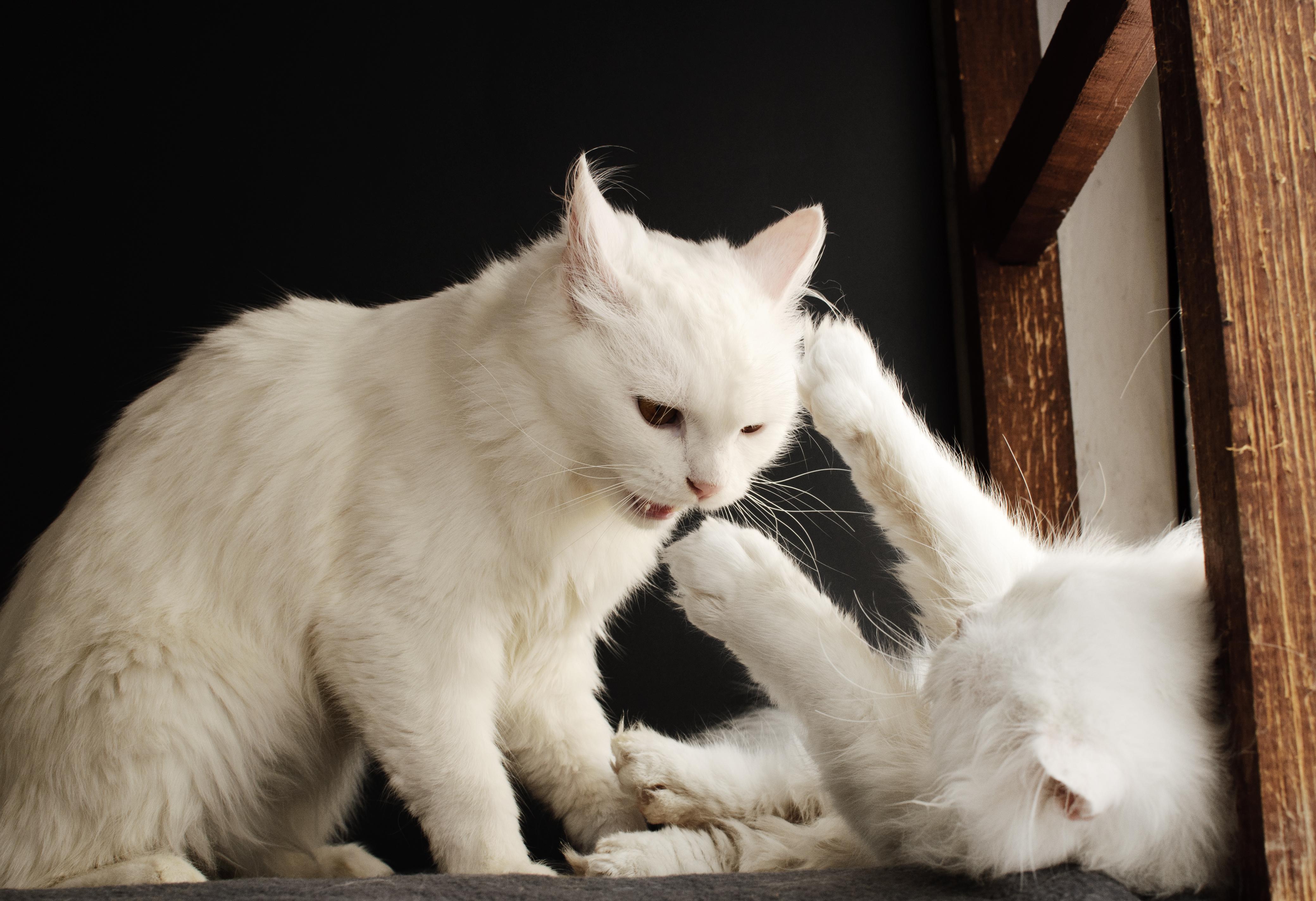 3. FELIWAY Descubre la personalidad de tu gato 5