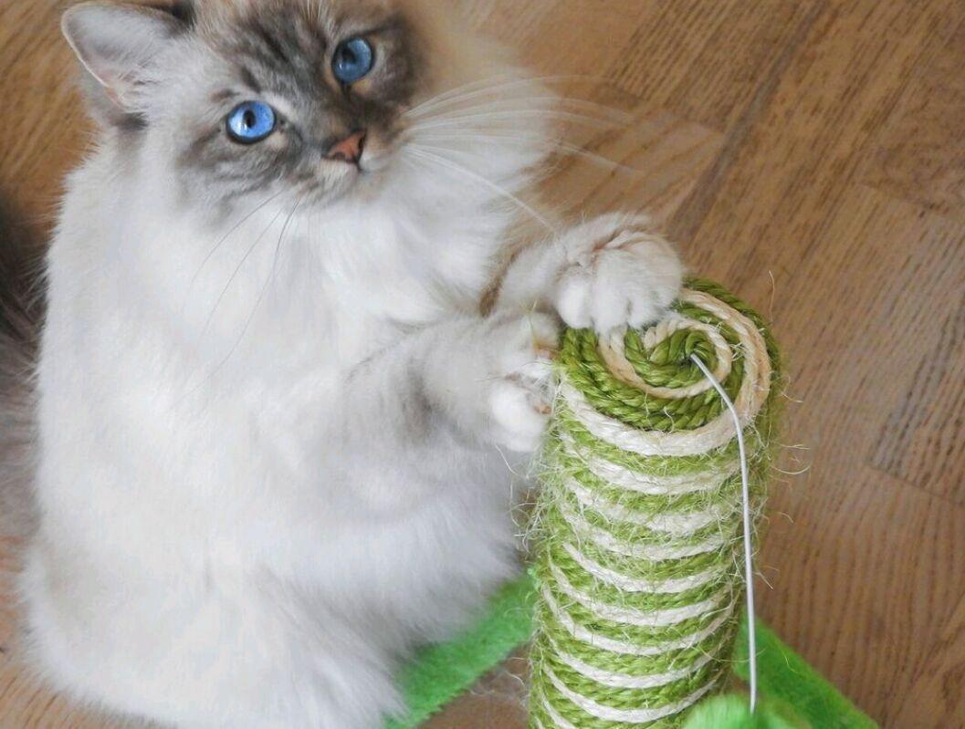 3. FELIWAY _ Un día en la vida de un gato 1