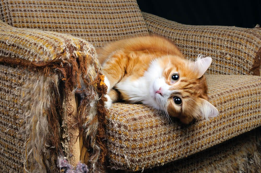 4 Tips To Stop Your Cat Scratching the Furniture_1