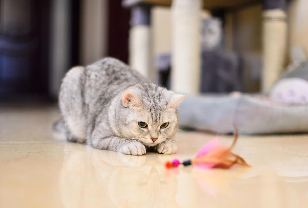 4 consejos para mantener a tu gato activo y saludable_1