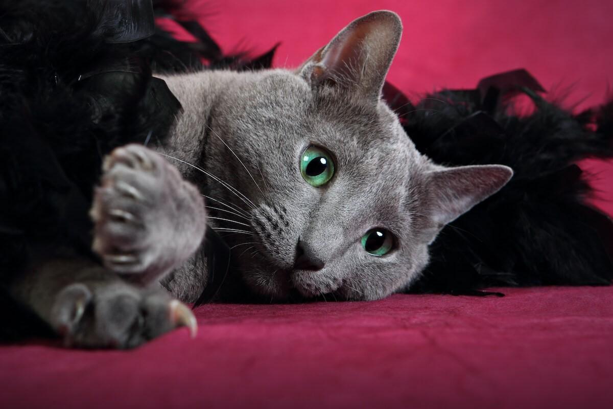4. Feliway_6 maneras de ayudar a un gato con ansiedad 1