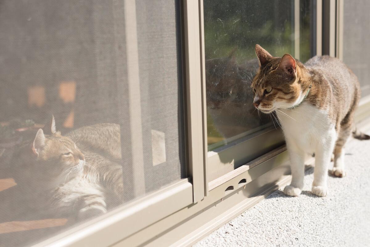 4. Feliway_BLOG_quienes_son_estos_gatos 4