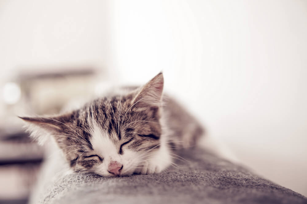 5 Reasons Your Cat Is Hissing At Your New Kitten_3-2