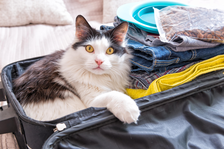 5 consejos para reducir los problemas de vuestros gatos durante los viajes-03