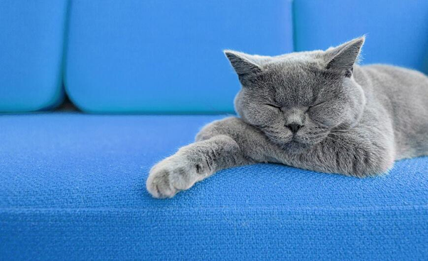 cats are super chilled