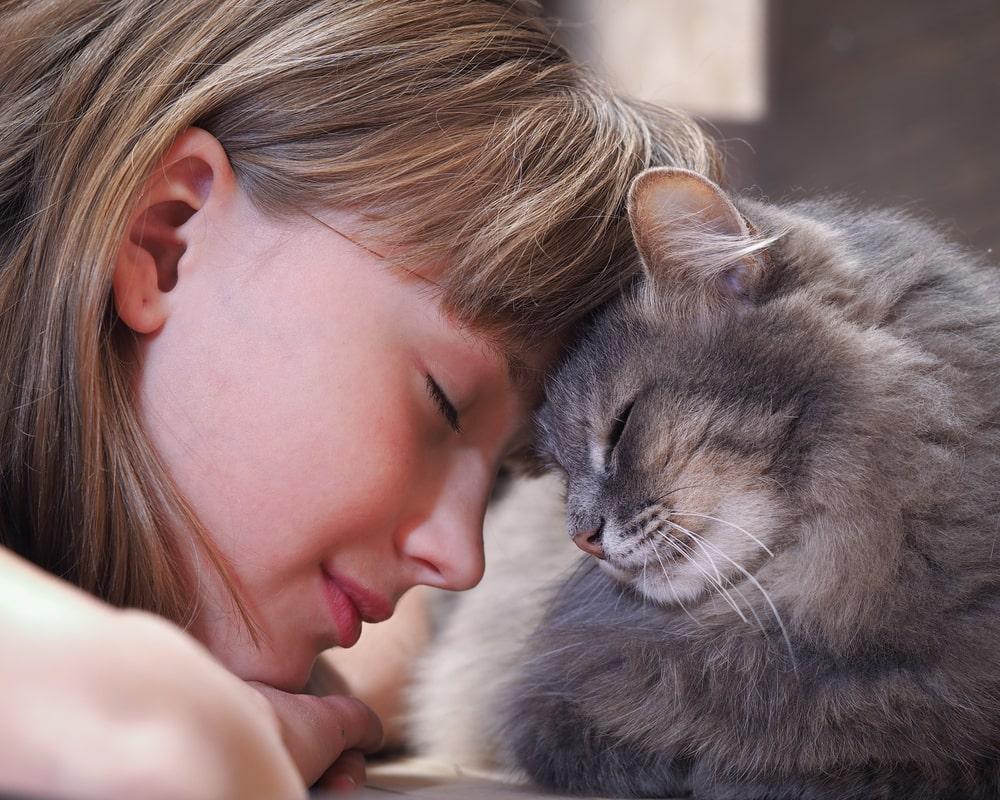 Katze und Mädchen Kopf an Kopf