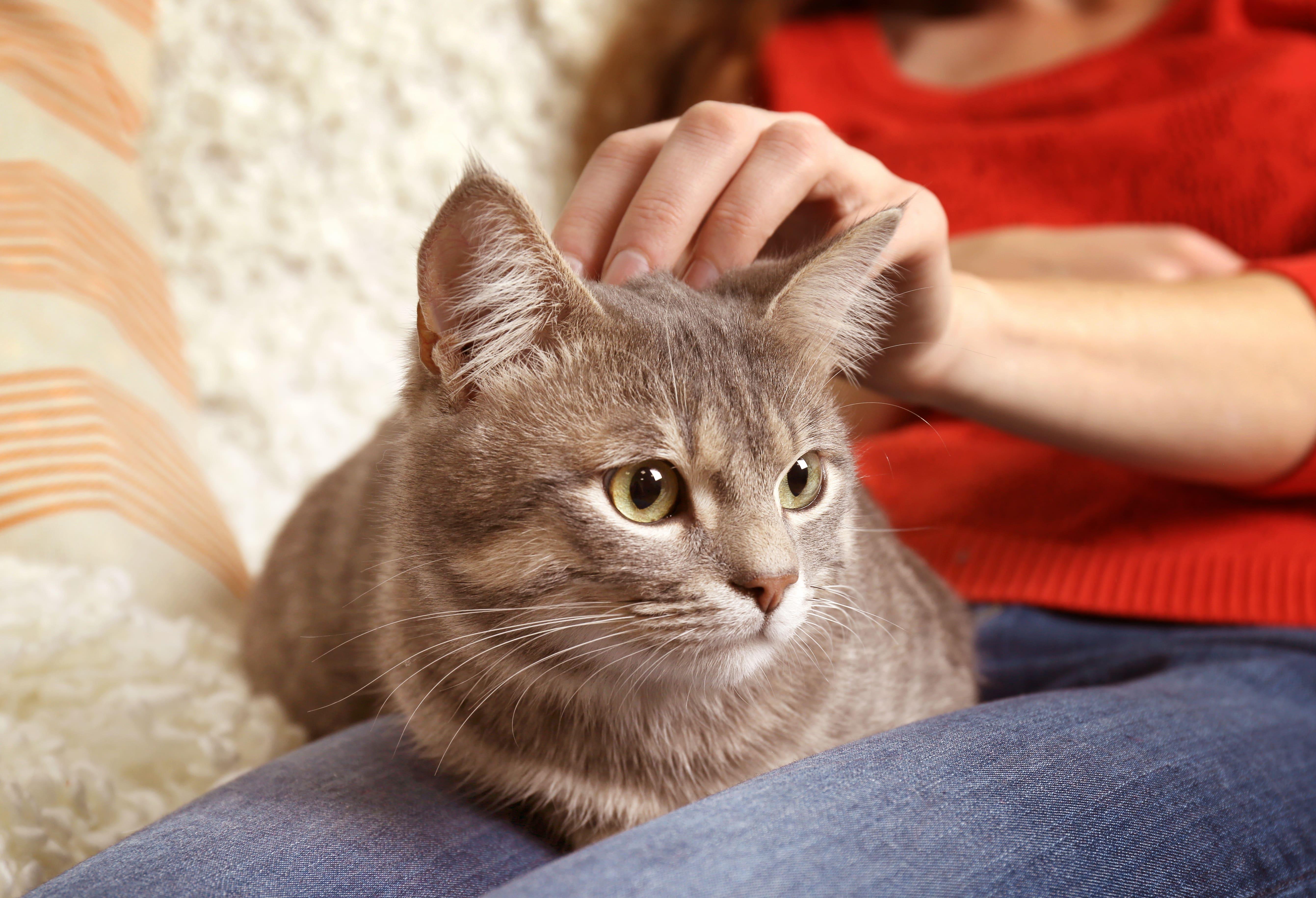 Frau streichelt Katze an Kopf
