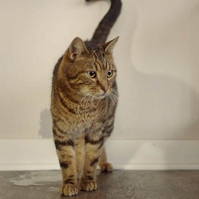 Katt som kissar inne