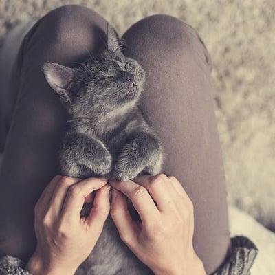 En nöjd katt i knäet