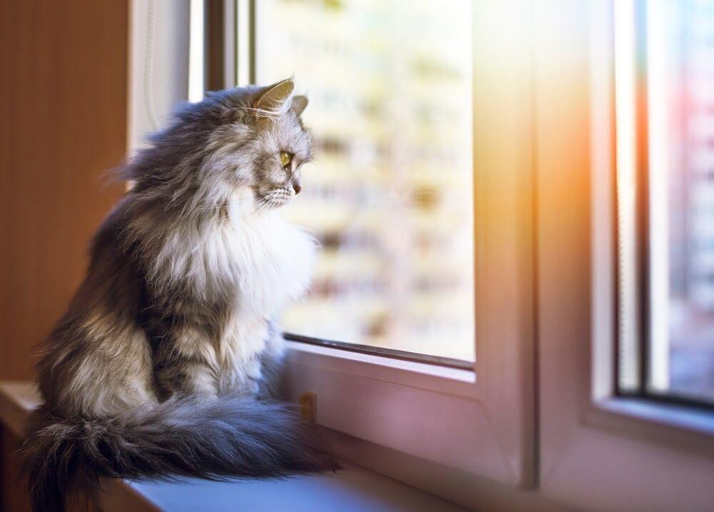 A tu gato le estresan otros gatos del vecindario 1