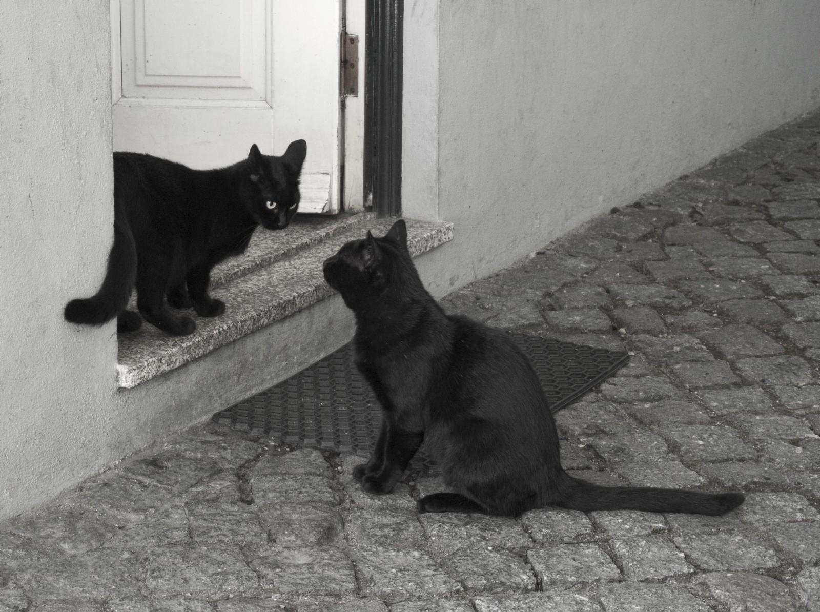 BLOG Feliway_Preguntas sobre rivalidad entre gatos 3