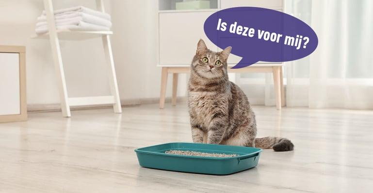 Waarom plast mijn kat op bed en niet in de kattenbak?