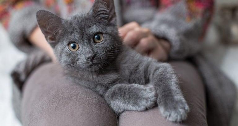 Tips bij angst voor vuurwerk kat: Laat je kat zelf kiezen waar zij graag wil zitten