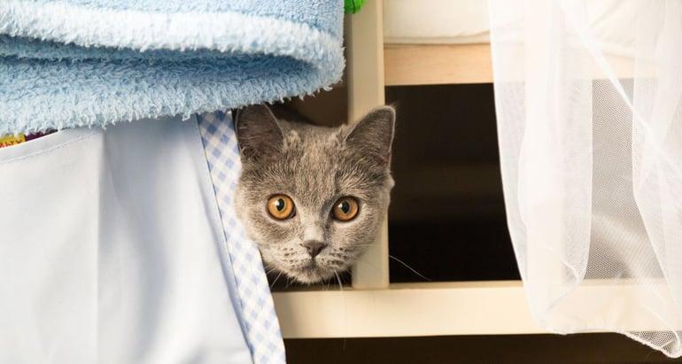 Tips bij angst voor vuurwerk kat: Creëer een veilige haven!