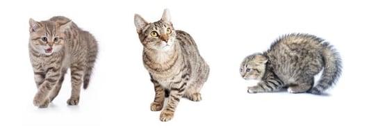 Signalen die kunnen duiden op angst en stress bij katten.