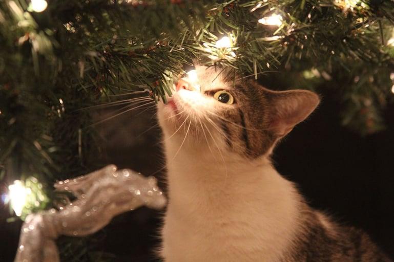 Feestmaand is stressmaand voor katten! Lees hier waarom.