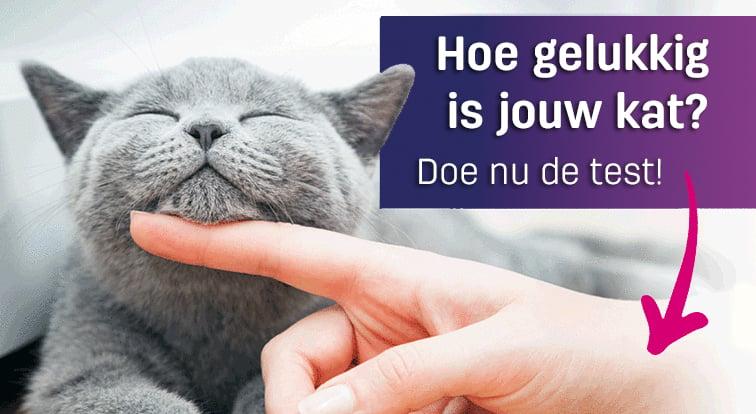 Hoe gelukkig is jouw kat? Doe de test!
