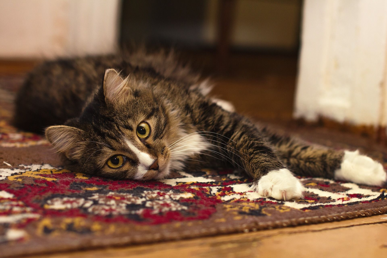 Help, mijn kat krabt aan het tapijt!