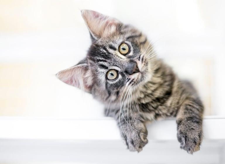 Hoe kan ik communiceren met mijn kat?