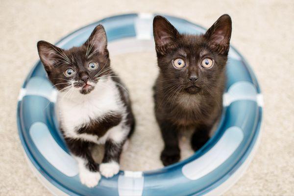 Kitten-speeltje