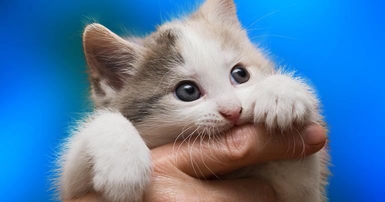 8 tips om te voorkomen dat jouw kitten jou bijt of krabt
