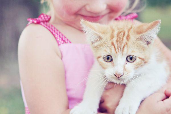 kitten-visite01