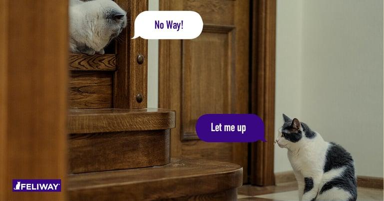 7 Tips om conflicten tussen katten te verminderen