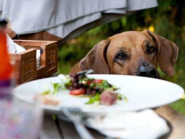 De gevaren van de zomer: BBQ restjes!
