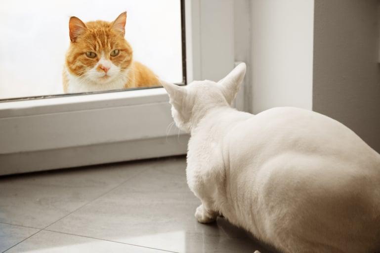 Tekenen van angst bij katten om op te letten
