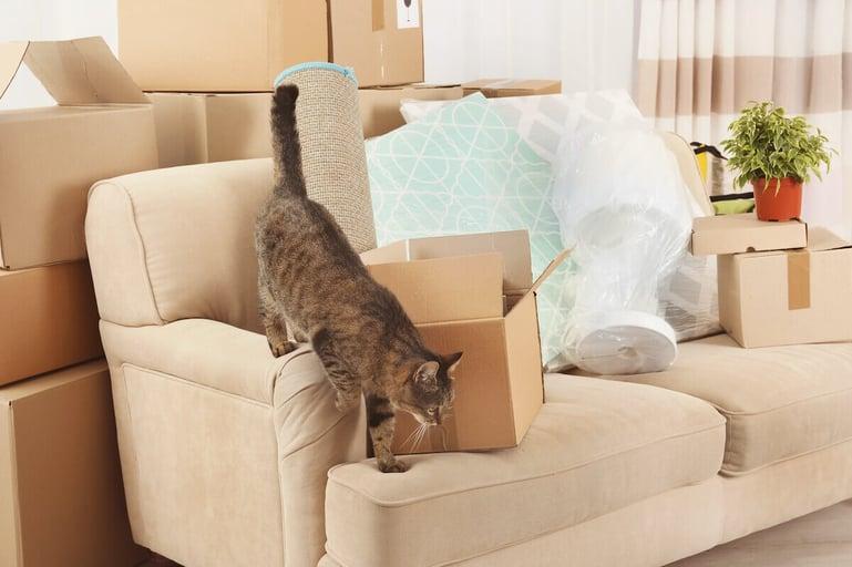 Tips voor het verhuizen met een kat
