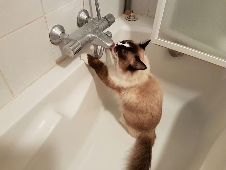 Drinkt je kat te weinig? Veel katten houden van stromend water